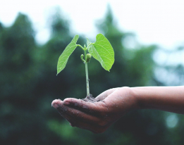 Agroécologie : de quoi s'agit-il ?
